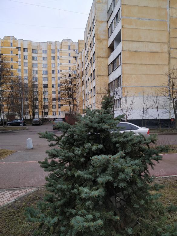 3-комнатная квартира, Авиаконструкторов пр-кт, 18к3 - фото 1